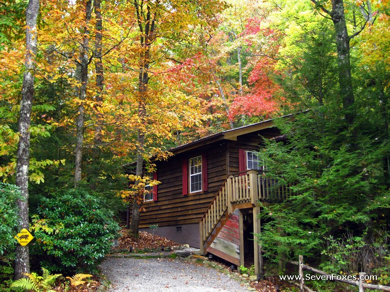 Bear Cave Cabin Rental Cabins At Seven Foxes Lake